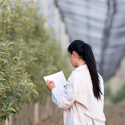 Agricultural scientist inspects crops