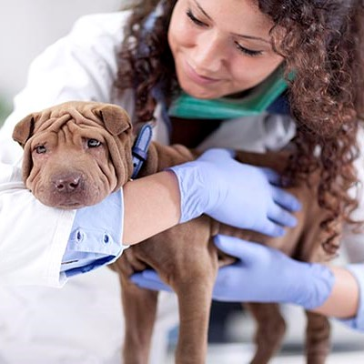 An animal health student cares for a small dog.
