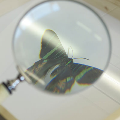 A photo of a butterfly underneath a magnifying glass