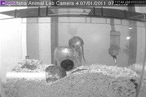 A screenshot of the gerbil camera