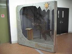 display created to house a fiberglass skull of the Styracosaurus