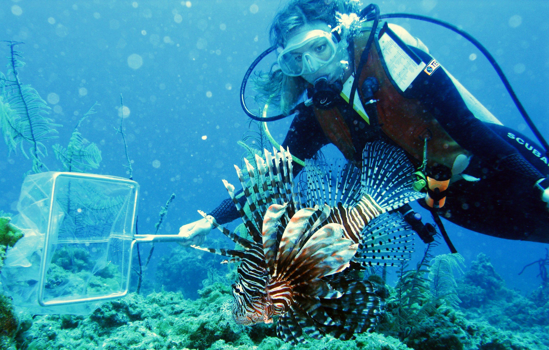 210302-invasive-species-lionfish-capture-stephanie-green-teaser.jpg