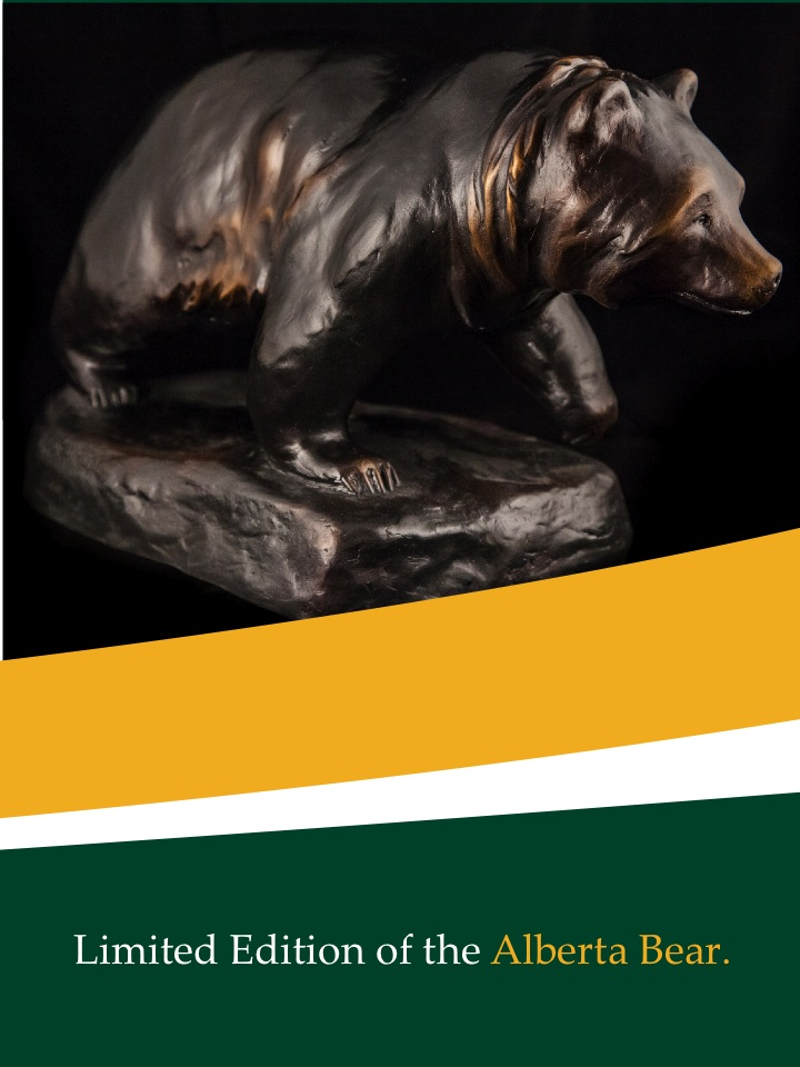 bear brochure cover