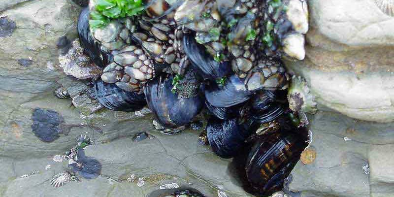 Why do mussels have such amazing stick-to-it-iveness?