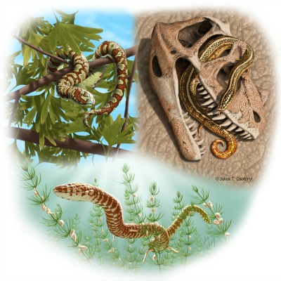 Artist's conception of three Jurassic to Lower Cretaceous snakes: top left, Portugalophis lignites (Upper Jurassic) in a gingko tree, from the coal swamp deposits at Guimarota, Portugal; top right, Diablophis gilmorei (Upper Jurassic), hiding in a ceratosaur skull, from the Morrison Formation, Fruita, Colorado; bottom center, Parviraptor estesi (Upper Jurassic/Lower Cretaceous) swimming in freshwater lake with snails and algae, from the Purbeck Limestone, Swanage, England.
