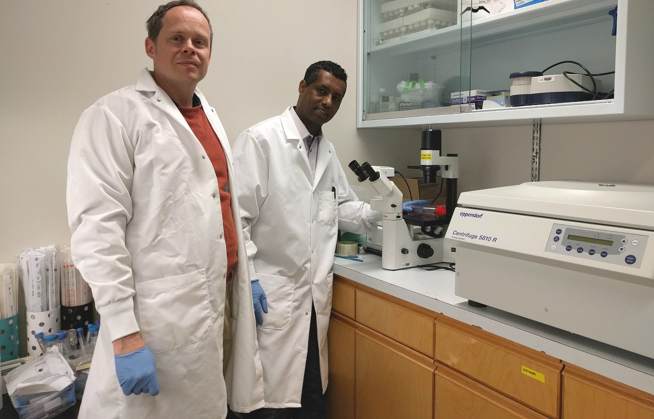 Researchers Thomas Simmen (left) and Yohannes Haile are co-authors of a study pinpointing a possible culprit for multiple sclerosis. Their research opens new avenues for treating the debilitating disease.