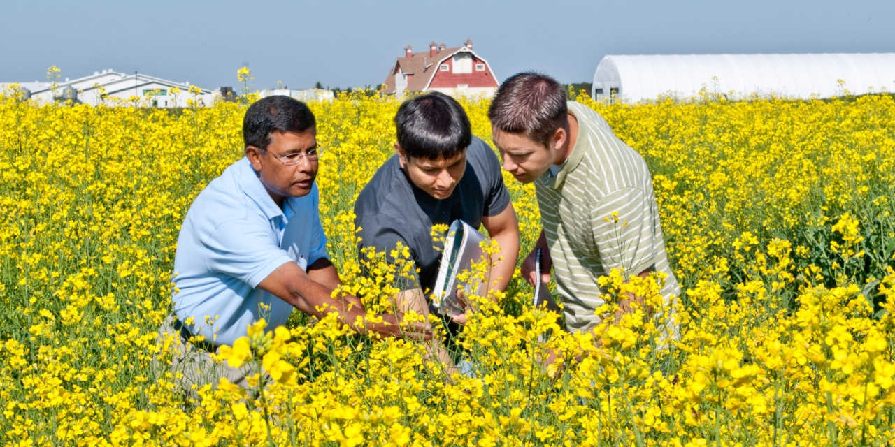 The U of A's agricultural research was ranked 40th in the world, leading a strong showing in several fields that helped the university move up seven spots to 81st in the latest NTU global research rankings. (Photo: Faculty of ALES)
