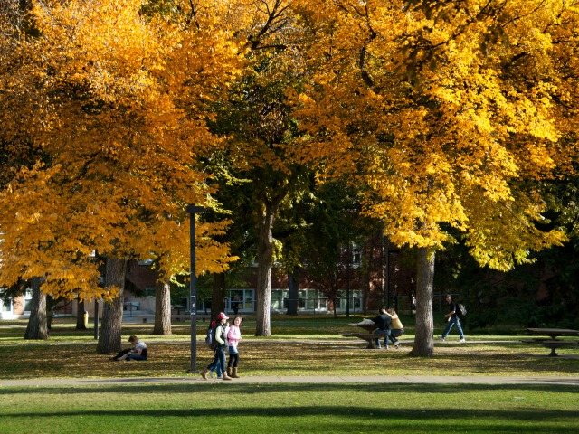 UAlberta wallpaper: North Campus in fall