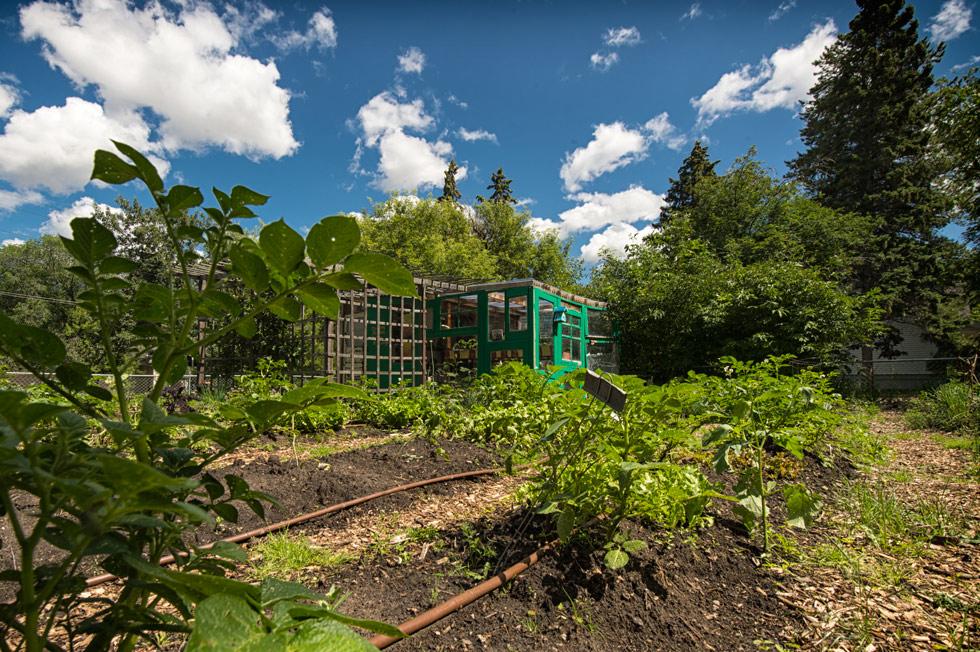 The Campus Community Garden