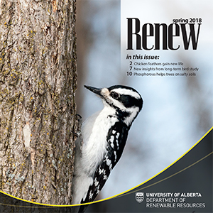 Renew Newsletter Cover Fall 2017