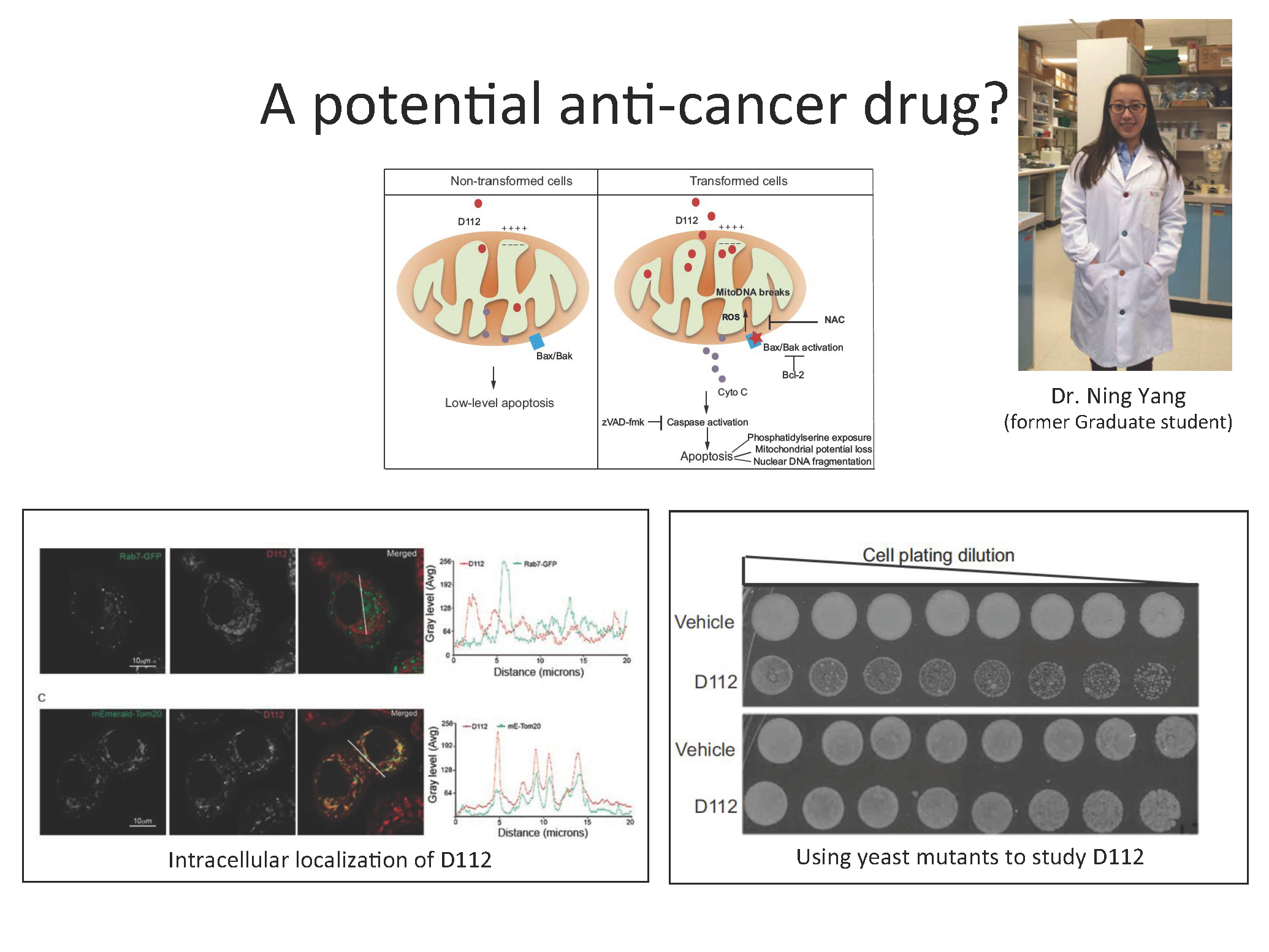 Investigating a small molecule for potential anti-cancer applications