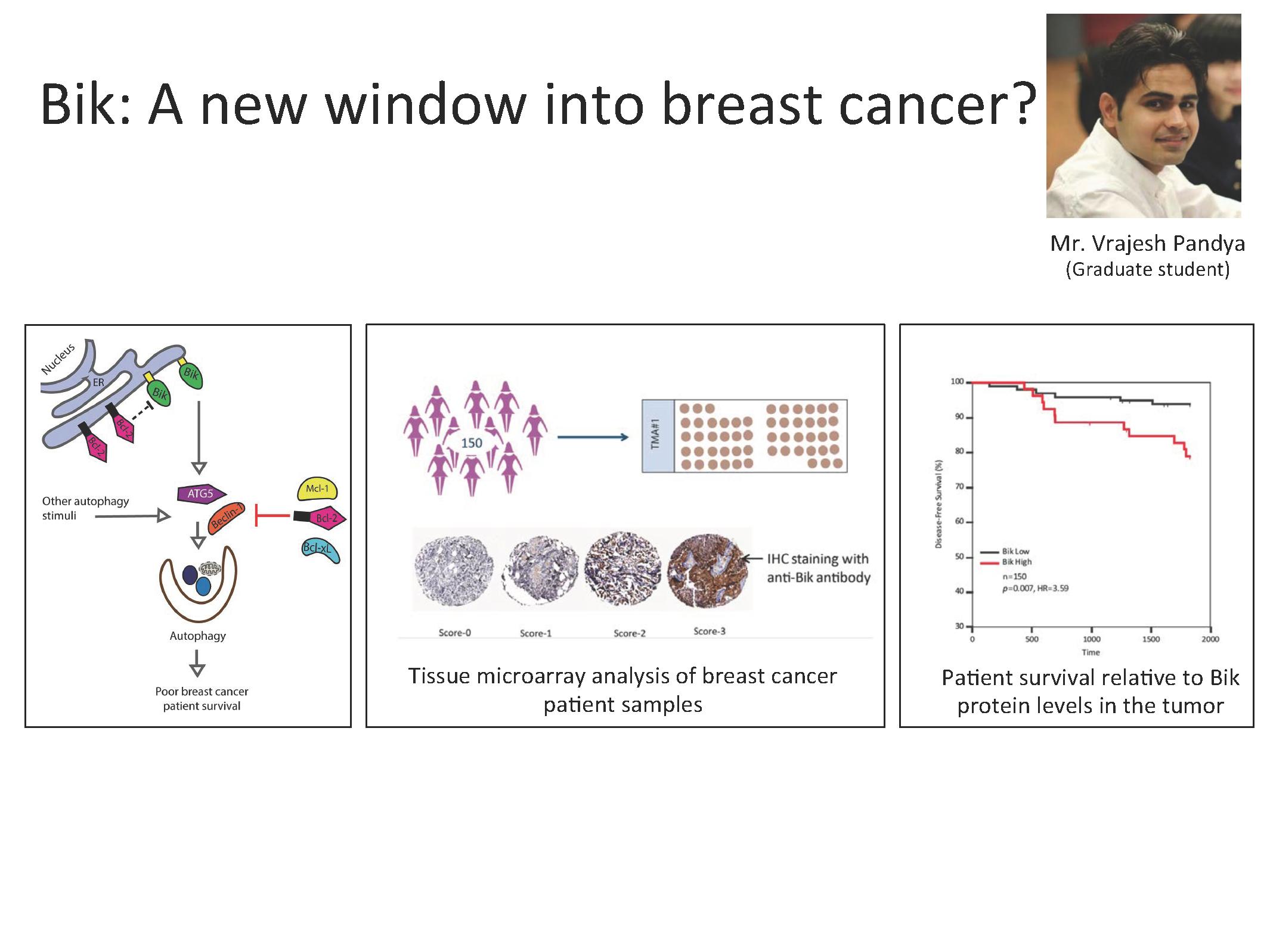 Bik: A new window into breast cancer?