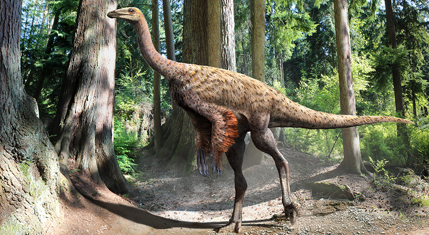 Illustration of Ornithomimus based on the findings of preserved tail feathers and soft tissue, by Julius Csotonyi