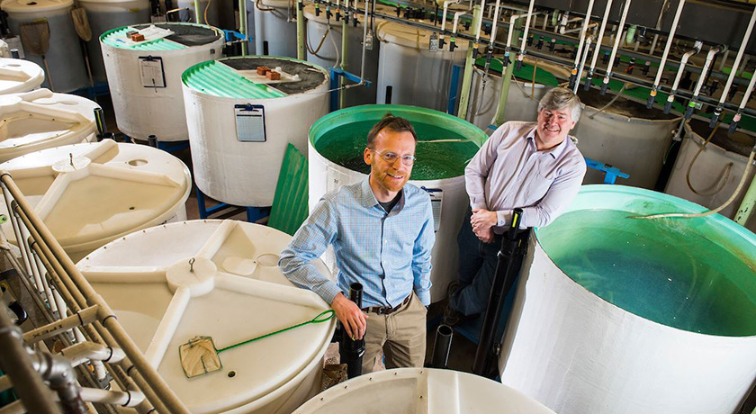 Greg Goss and Dan Alessi are studying the effects of hydraulic fracturing fluids on aquatic animals.