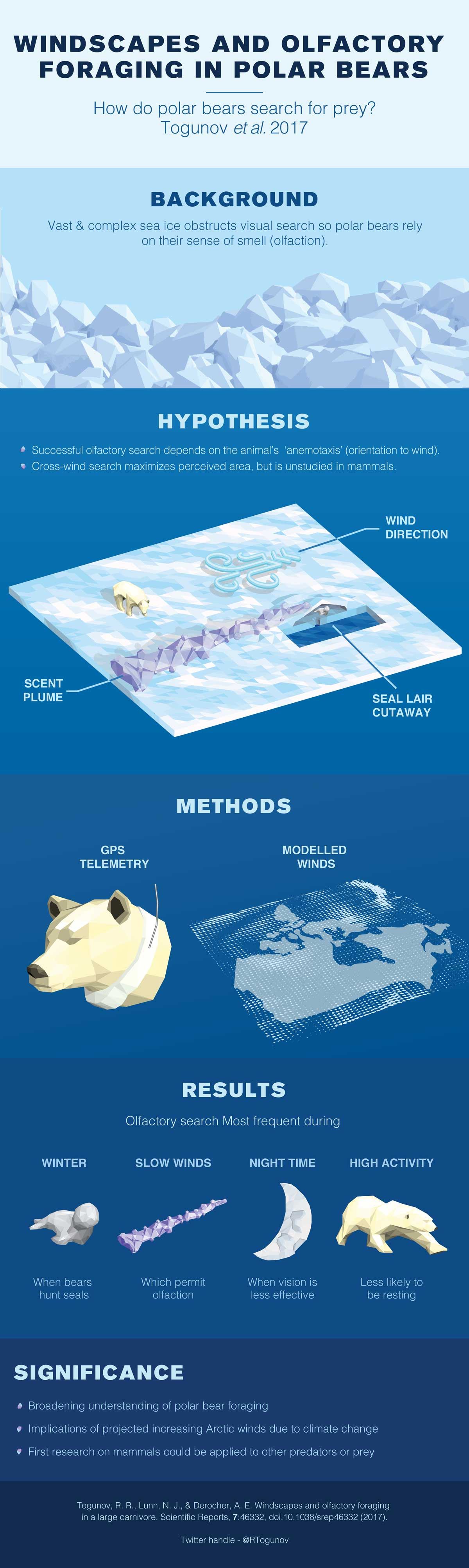 Infographic describing olfactory foraging in polar bears who use their nose and the power of the wind to hunt for the prey.