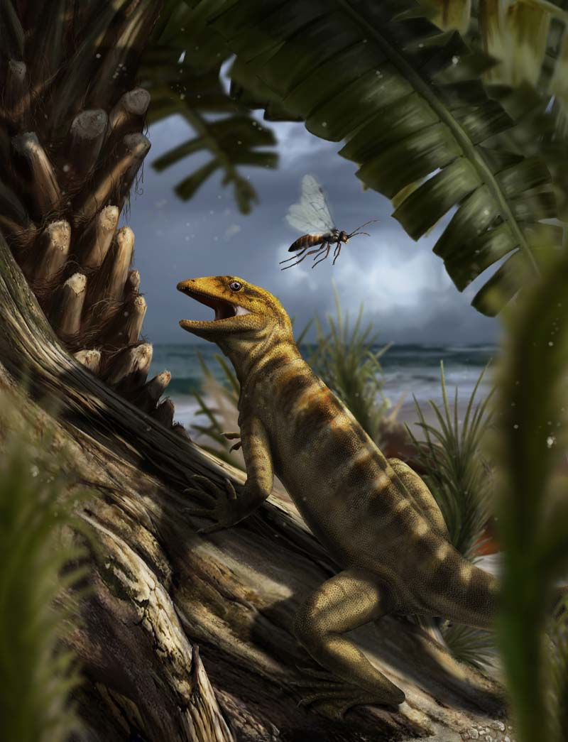 Megachirella, the most ancient ancestor of all modern lizards and snakes, in an artists rendering by Davide Bonadonna