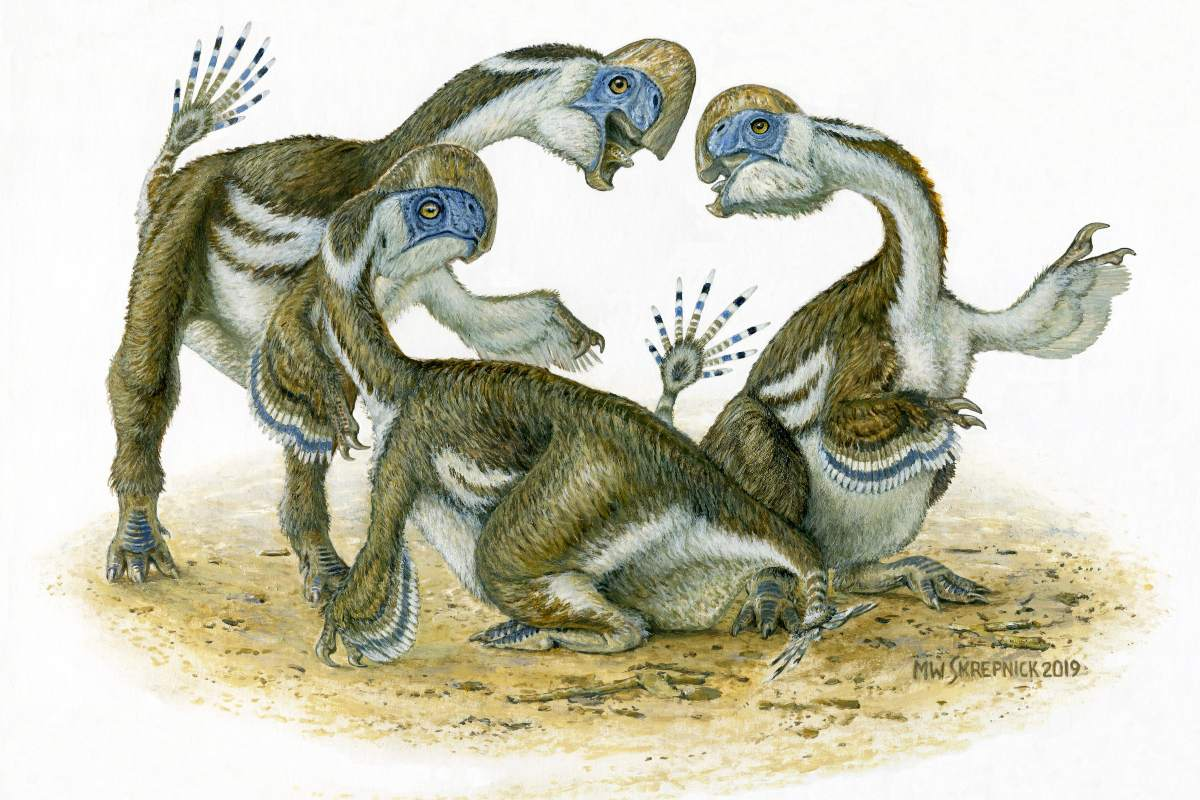 An artist's depiction of what the new species of oviraptorid may have looked like. The discovery of several juveniles of the same age in a group suggests social behaviour by the species.