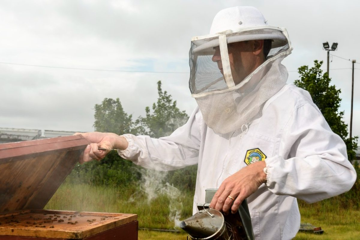 Understanding the biology and evolution of honey bees has been the subject of Olav Rueppell's research for nearly 20 years.