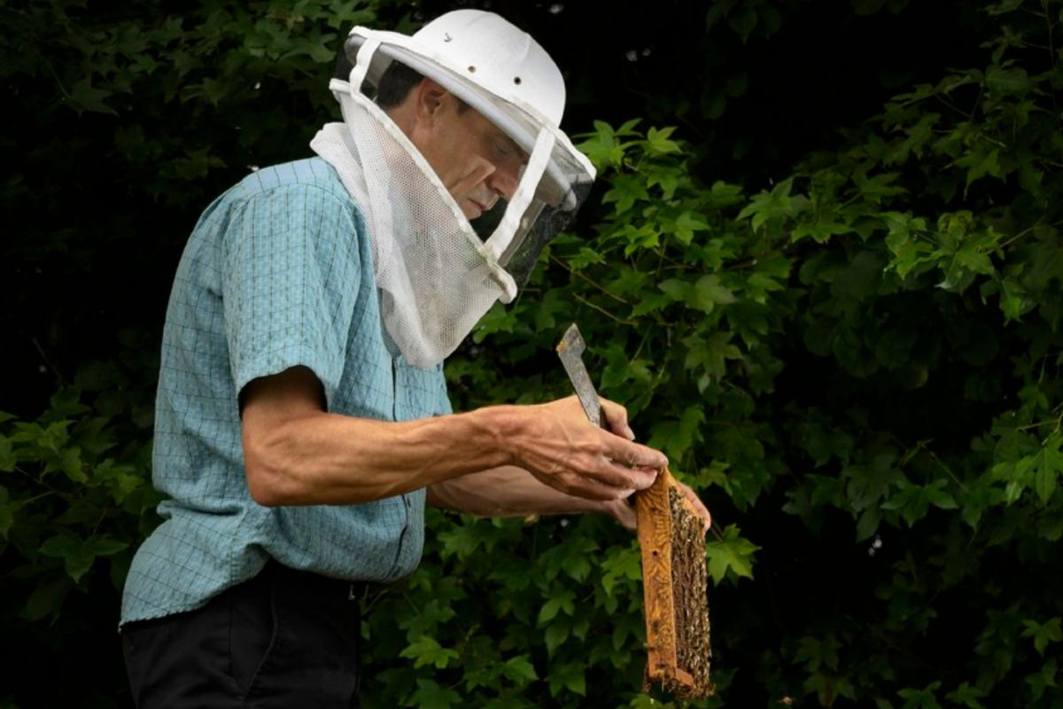 Olav Rueppell, honey bee expert and professor in the Department of Biological Sciences.